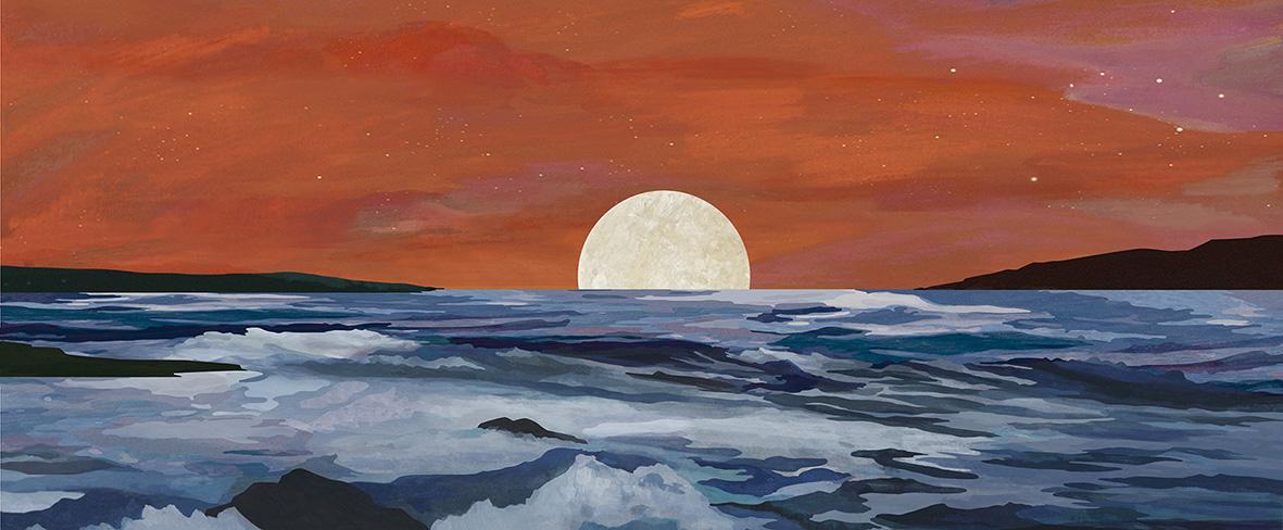 Calendoula, illustratiom, sea, teresa arroyo corcobado
