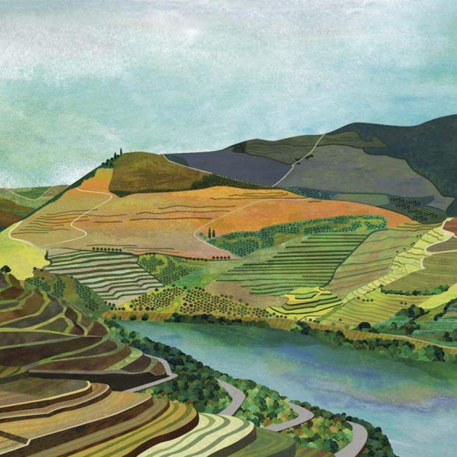 Vino, Duero, Portugal, Teresa Arroyo Corcobado, Illustration